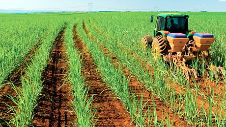 Tecnologia poderá contribuir para melhoramento e obtenção de variedades mais produtivas da planta, com características de interesse agrícola. Foto: Divulgação