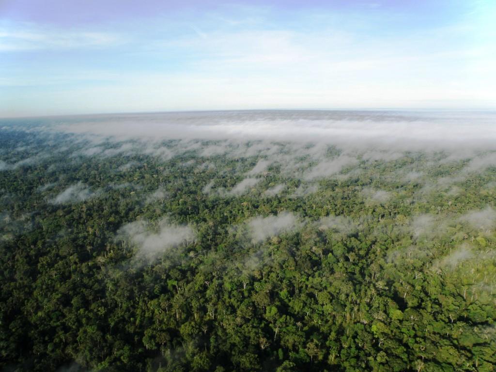 Vista aérea da floresta amazônica no Acre. Foto: © WWF-Brasil/Bruno Taitson