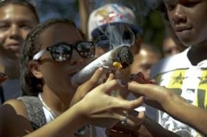 A maconha possui pelo menos 60 princípios ativos. Foto: Raul ARBOLEDA / AFP