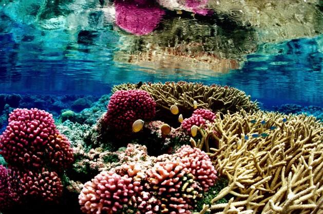 Adotar medidas contra a sobrepesca e a excessiva contaminação costeira pode ajudar os arrecifes a se recuperarem. Foto: Jim Maragos/U.S. Fish and Wildlife Service