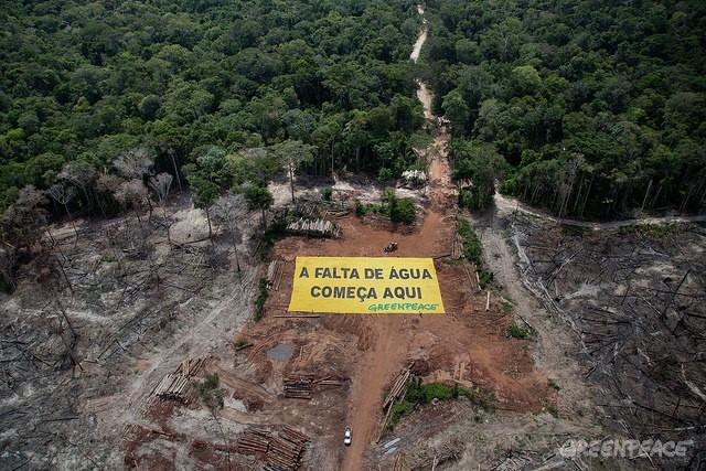 No início de abril ativistas do Greenpeace protestaram contra o desmatamento em uma área recém destruída em Roraima. Foto: ©Greenpeace/Marizilda Cruppe