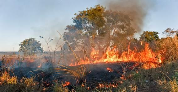 Foto: Haroldo Palo Jr/Fundação Grupo Boticário