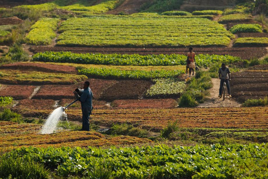 Solos saudáveis são essenciais para a segurança alimentar. Foto: FAO/Olivier Asselin