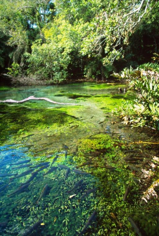 Os proprietários de terra que decidem aderir ao Pagamento por Serviços Ambientais (PSA) são remunerados por atuar em prol da conservação e da preservação dos recursos hídricos.  © Michael Gunther / WWF