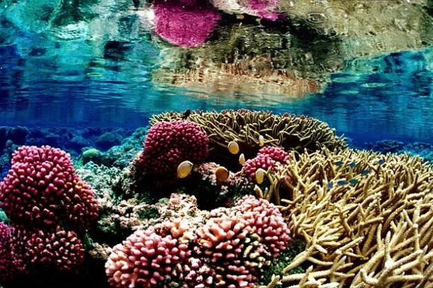 Ecossistema de arrecifes coralinos no Refúgio Nacional de Vida Silvestre do Atol de Palmyra, nos Estados Unidos. Foto: Jim Maragos/Serviços de Pesca e Vida Silvestre dos Estados Unidos