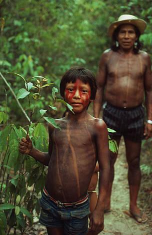 Indígenas Kayapó com planta medicinal © Mauri Rautkari / WWF