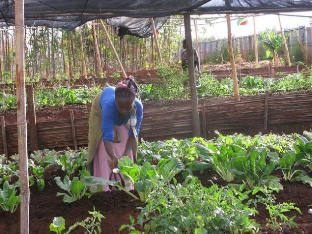 A escassez de terra na Etiópia é um tema crítico para os pequenos agricultores que são 80% da população. Foto: Isaías Esipisu/IPS