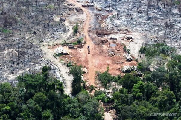 """Área desmatada em Roraima, identificada graças ao SAD, foi alvo de protesto do Greenpeace: """"Sem floresta não tem água!"""" Foto:© Marizilda Cruppe/Greenpeace"""
