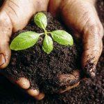 Rakuten inicia projeto de reflorestamento na Mata Atlântica