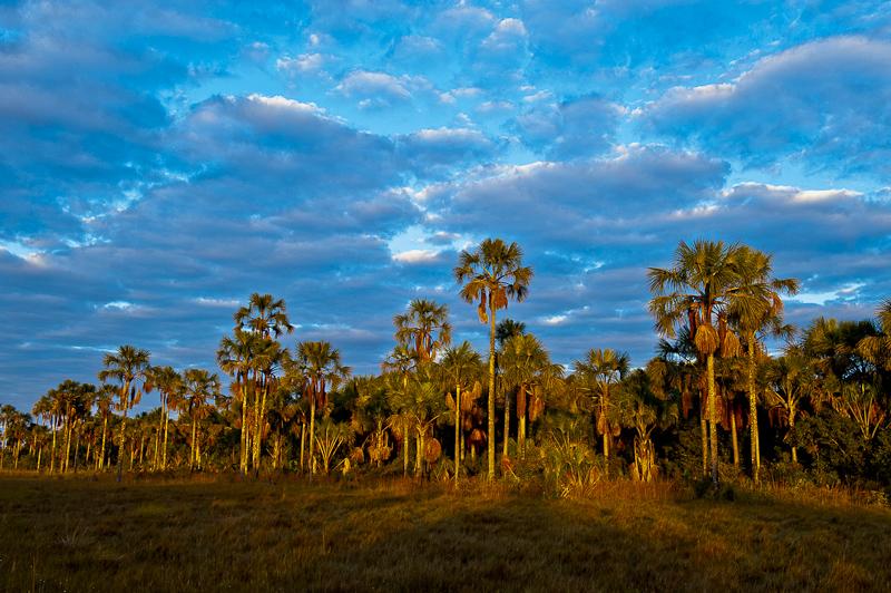 Cerrado: savana mais rica do planeta. Foto: © Bento Viana/WWF-Brasil