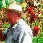 Como as mudanças climáticas podem influenciar seu vinho favorito?