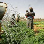 Novos padrões de segurança alimentar