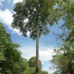 Projeto estimula o protagonismo de jovens extrativistas na Amazônia