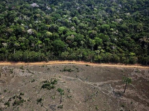 Área recentemente desmatada na Amazônia. Foto: Marizilda Cruppe/Greenpeace
