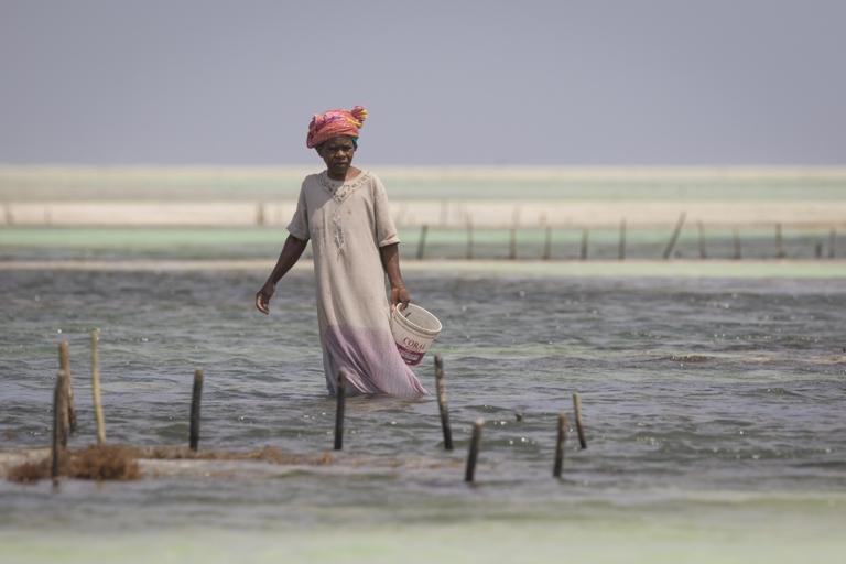 As graves inundações estão entre os principais efeitos devastadores da mudança climática. Foto: Shutterstock