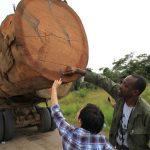Especialistas debatem produção responsável de madeira