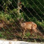 Loteamentos com mata nativa serão obrigados a cuidar da natureza