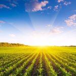 Como atrair jovens para a agricultura
