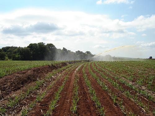 Biomassa de cana-de-açúcar: alternativa ao abastecimento e segurança energética. Foto: Divulgação/ Internet