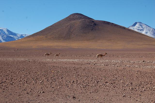 O deserto de Atacama, o mais árido do mundo, acolhe parte importante do potencial geotérmico do Chile e é o local da primeira usina sul-americana para aproveitar essa energia. Foto: Marianela Jarroud/IPS
