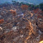 """Desmate """"a prestação"""" explode na Amazônia"""