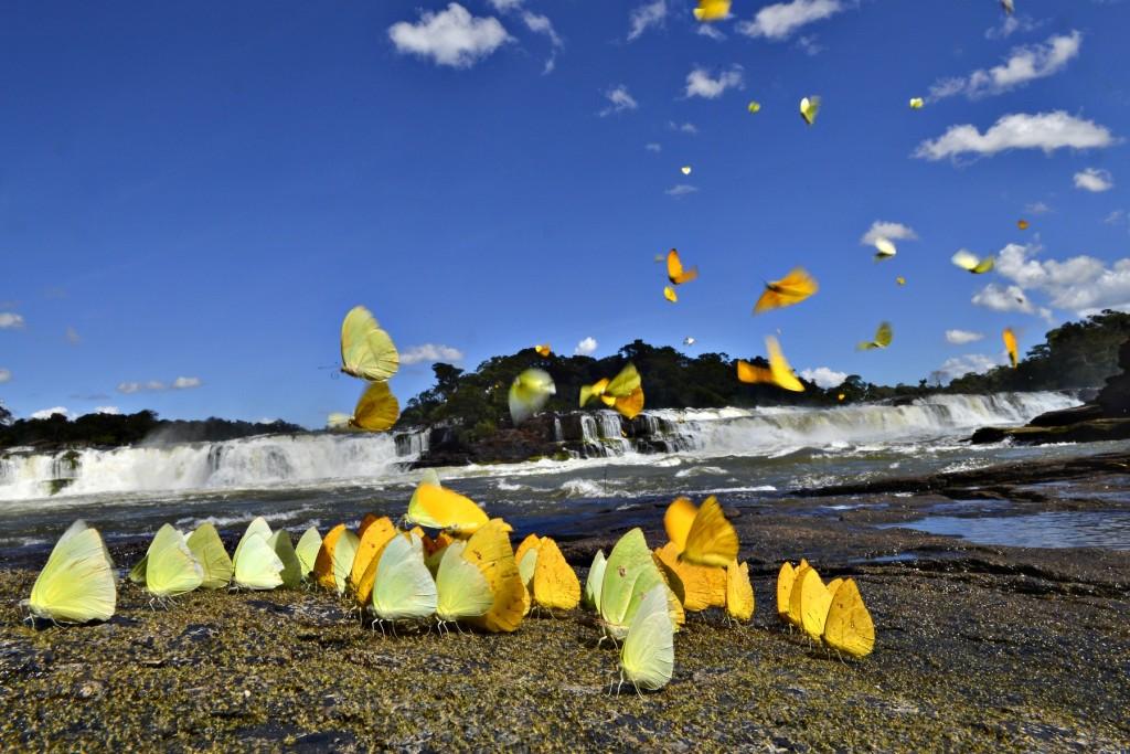 Cerca de 40 iniciativas do Congresso Nacional que colocam em risco as unidades de conservação e terras indígenas, como o Parque Nacional do Juruena. Foto: © Adriano Gambarini