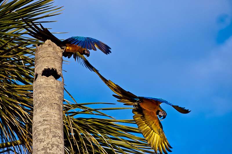 Biodiversidade do Cerrado. Foto: © Bento Viana/WWF-Brasil