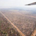 Emissão por desmate para de cair no Brasil