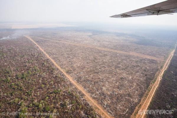 """Área desmatada no Mato Grosso para expansão do agronegócio. Estado foi o """"campeão"""" em alertas de desmatamento e degradação. Foto: © Paulo Pereira/Greenpeace"""