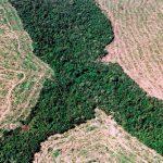 Desmatamento dispara na Amazônia