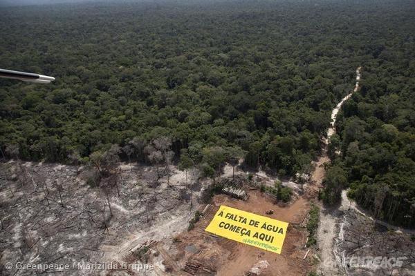 Área recém desmatada em Roraima. Foto: © Greenpeace/Marizilda Cruppe