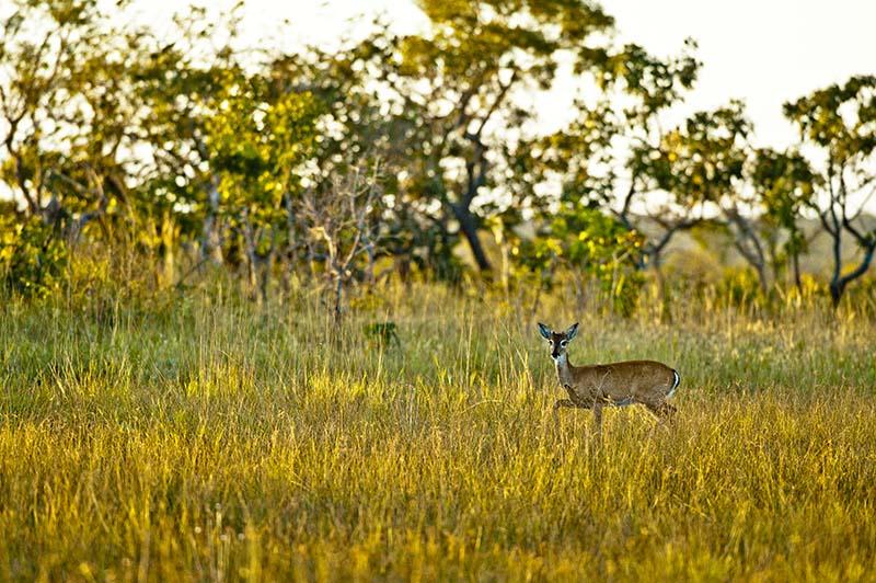 Fauna do Mosaico Sertão Veredas Peruaçu. Foto: © Bento Viana/WWF-Brasil