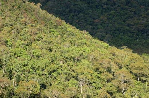 Floresta em área indígena na Amazônia. Foto: Damian Nery/Ipam