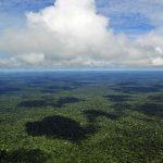 Começa nesta segunda-feira (07) o Congresso Florestal Mundial