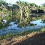 Município do Pantanal vai recuperar 18 nascentes em um ano