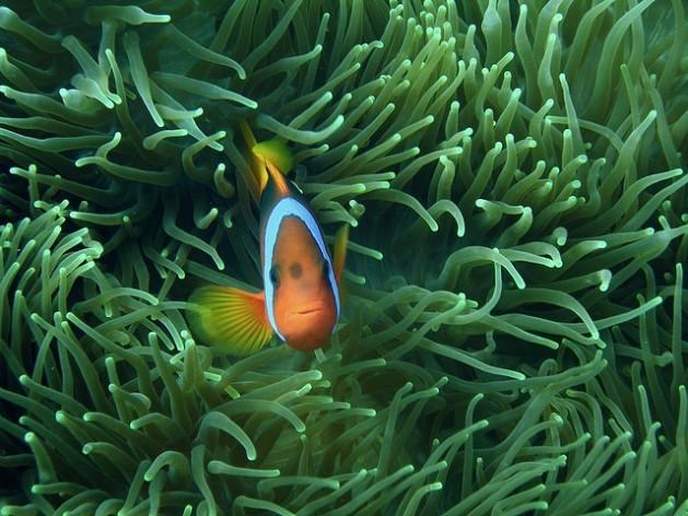 Um estudo da ONU assegura que os oceanos do mundo estão em dificuldades. Foto: Shek Graham/cc-by-2.0