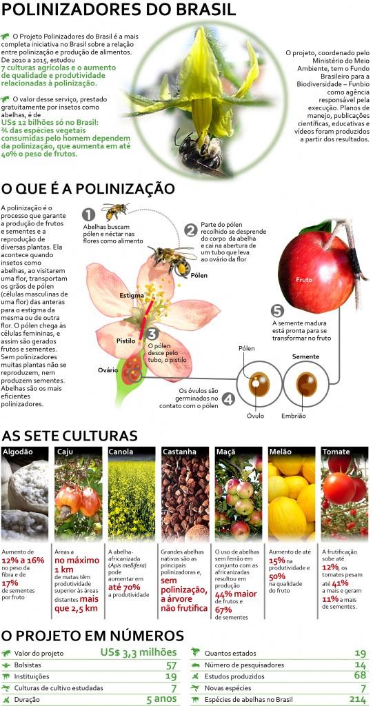 Polinizacao_infográfico