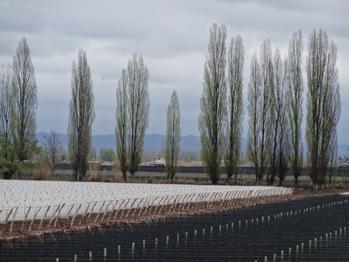 Vinhedos da Bodega Dominio del Plata, em Luján de Cuyo, na província de Mendoza, na Argentina. É uma das adegas do Programa Produção Mais Limpa, que impulsiona uma reconversão sustentável de todos os processos dos viticultores. Foto: Fabiana Frayssinet/IPS