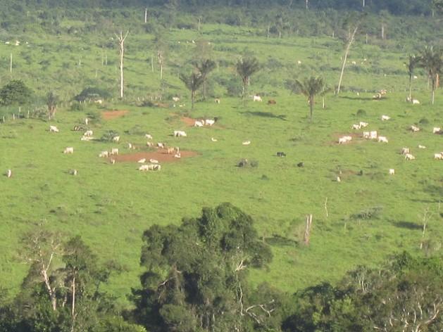 As pastagens substituíram as florestas amazônicas em Brasil Novo, um município da bacia do rio Xingu, onde é construída a gigantesca hidrelétrica de Belo Monte. A pecuária de baixa produtividade, com um ou dois animais por hectare, é o grande fator do desmatamento e da degradação do solo na região, e a meta do governo é recuperar apenas um quarto da área degradada por essa atividade. Foto: Mario Osava/IPS
