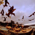 Petróleo, gás e mineração ameaçam quase um terço dos Patrimônios Naturais Mundiais