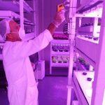 Fazendas verticais, agricultura do futuro