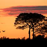 """Documentário """"Pantanal"""" é filmado em seis cidades"""
