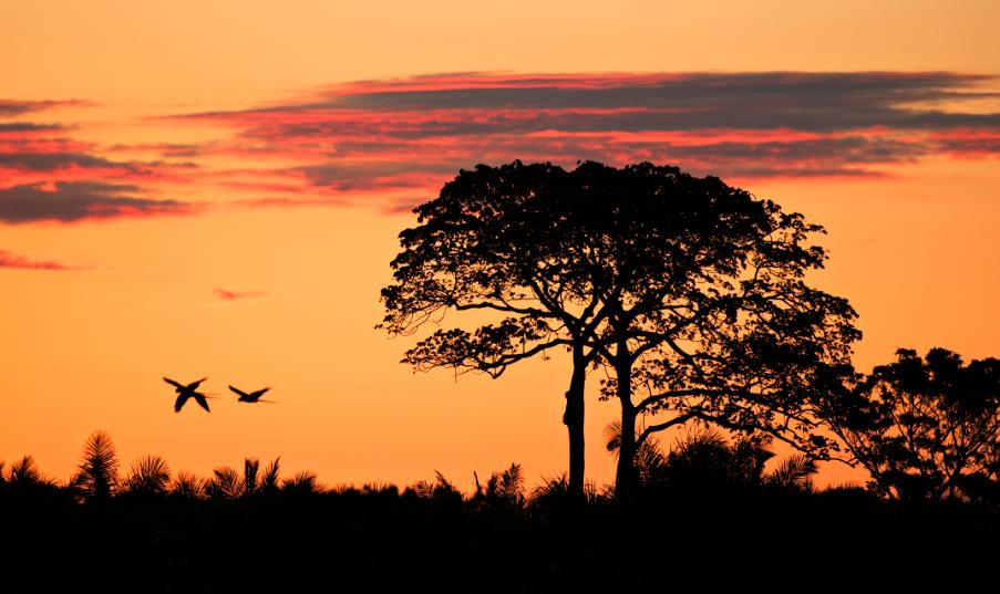 O Pantanal está localizado no coração da América do Sul e tem 170.500,92 mil km² de extensão, ocupando parte dos estados do Mato Grosso e Mato Grosso do Sul estendendo-se pela Bolívia e Paraguai. Foto: © Adriano Gambarini/WWF-Brasil