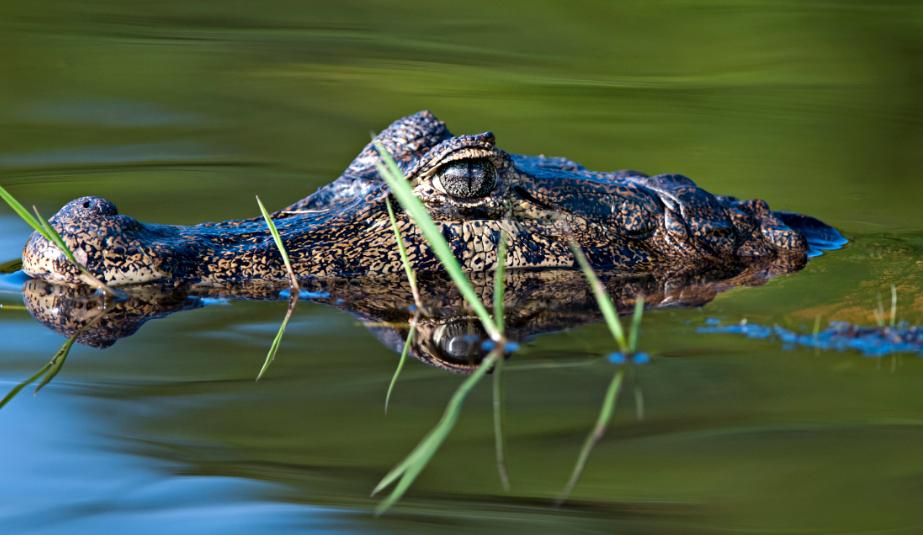 No Pantanal vivem mais de 4,7 mil espécies animais e vegetal. Foto: © Adriano Gambarini/WWF-Brasil
