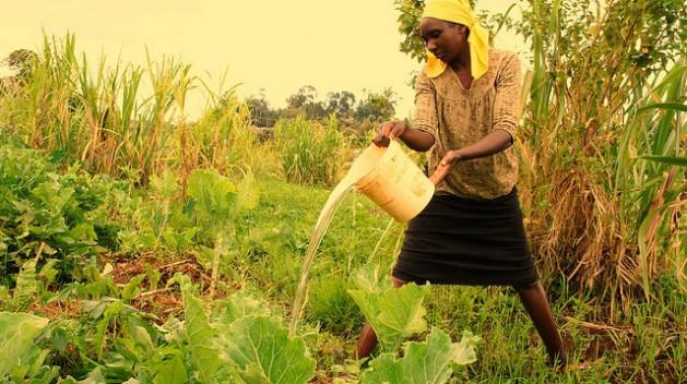 Uma moradora de Ngangarithi, no Quênia, rega seus cultivos com água das zonas úmidas. Foto: Miriam Gathigah/IPS