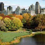 Dois anos antes do prazo, Nova York executa meta de plantar 1 milhão de árvores