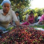 Benefícios da certificação incidem no aumento da renda do cafeicultor
