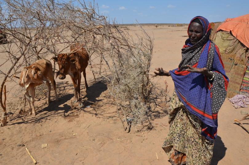 Grandes áreas da Etiópia sofrem com a seca, agravada pelo fenômeno El Niño. Na foto, Lule Dubet caminhou 30 quilômetros com seus dez filhos para procurar comida. Ela perdeu 25 cabeças de gado por conta da seca e os últimos dois estão morrendo. Foto: PMA/Melese Awoke