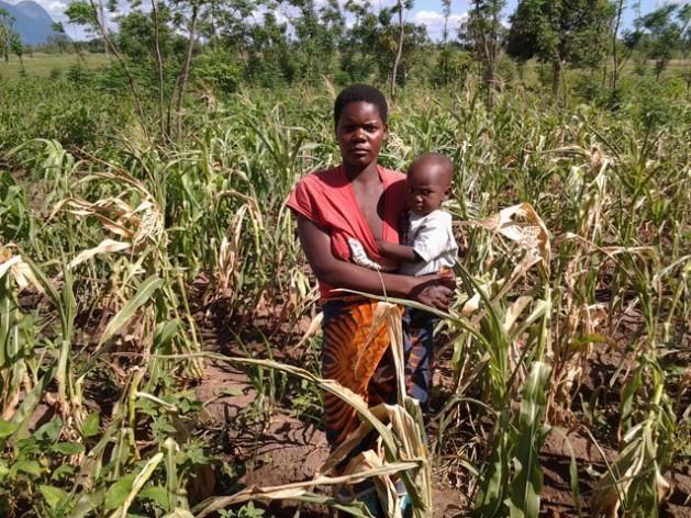 Mwandida Mojolo tem quatro filhos. Na foto está parada diante de seu milharal, que sofreu os efeitos do fenômeno El Niño/Oscilação do Sul. Foto: CharityPhiri/IPS