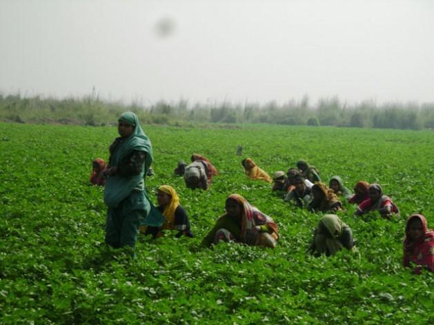 As camponesas de Bangladesh preferem cultivos resistentes às variações climáticas. Foto: NaimulHaq/IPS
